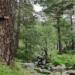 Arbolterapia – La magia de abrazar un árbol