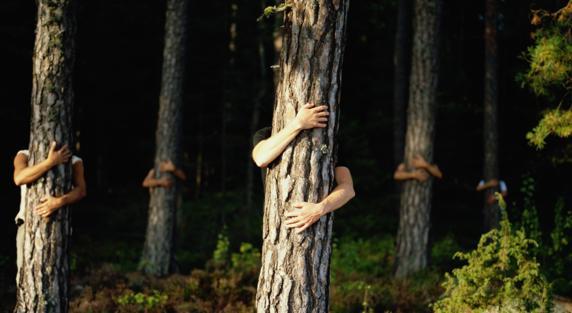 Abrazar un árbol - Osteopatía Jacobo Figueroa
